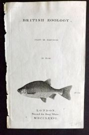 Pennant 1776 Antique Fish Print. British Zoology Illus. Title Page